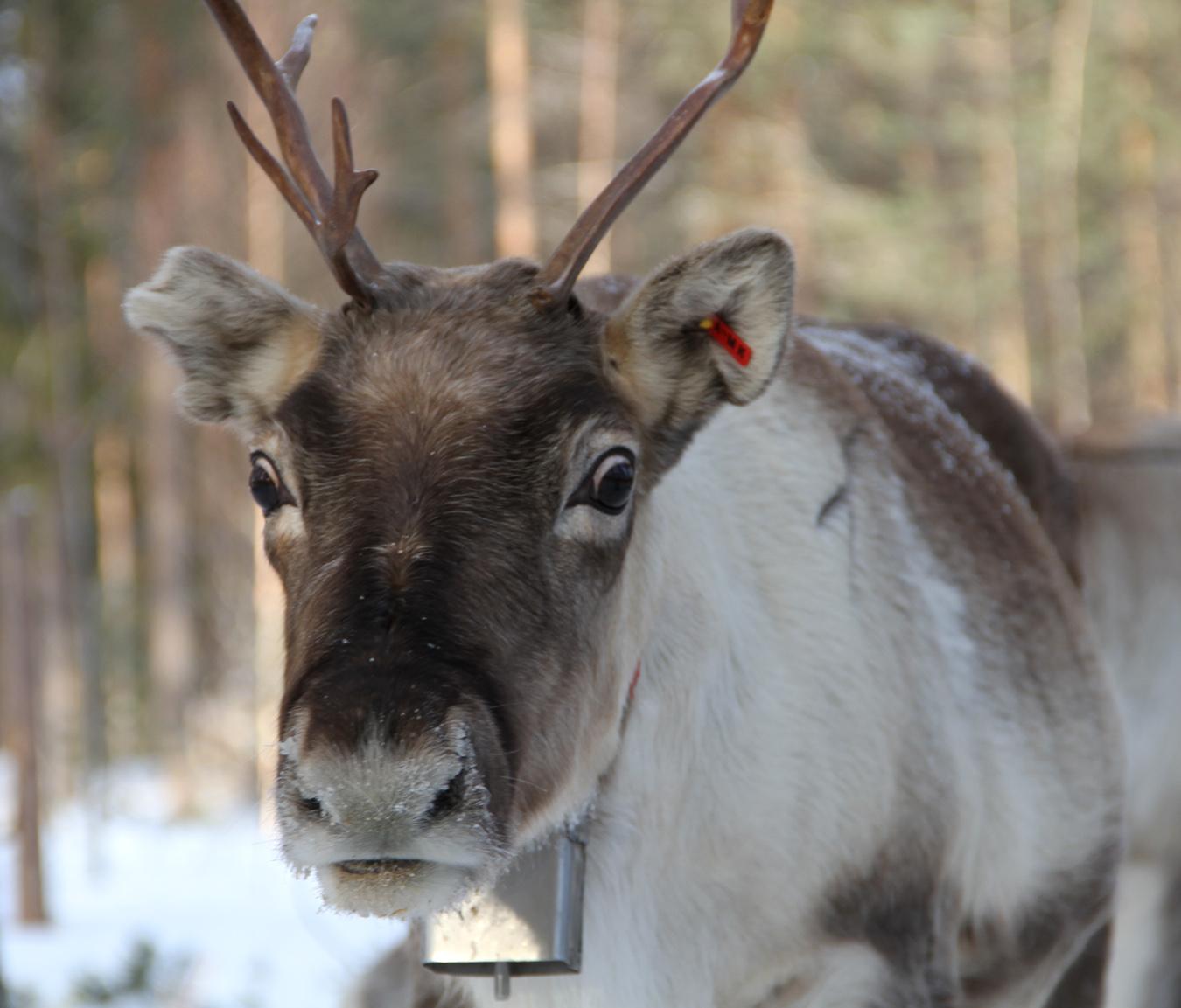 pohjois suomi matkailu Joensuu